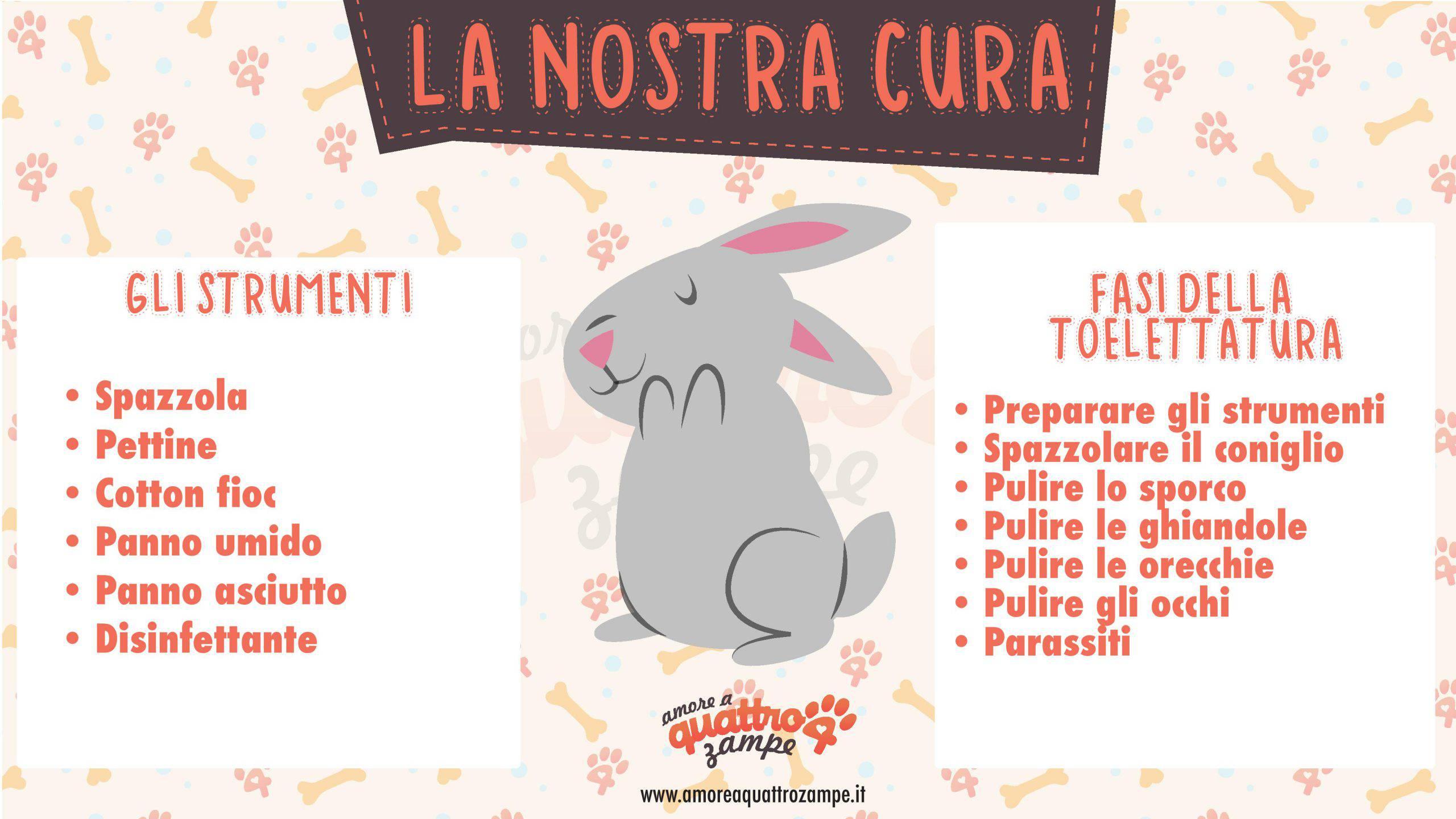 cura coniglio infografica