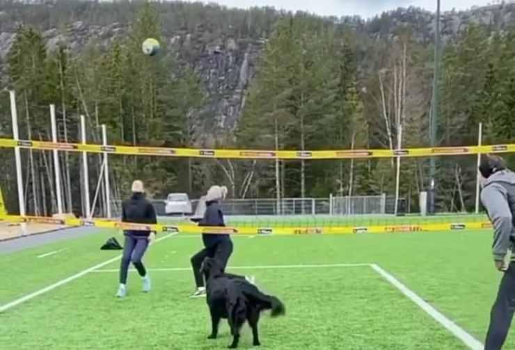 Il cane si prepara al lancio del pallone (Foto video)