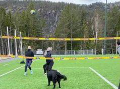 Il cane alle prese con il volley (Foto video)