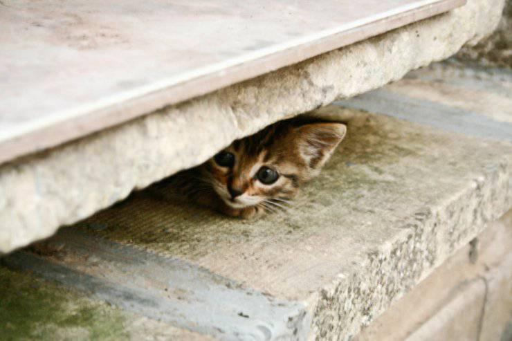 depressione nel gatto