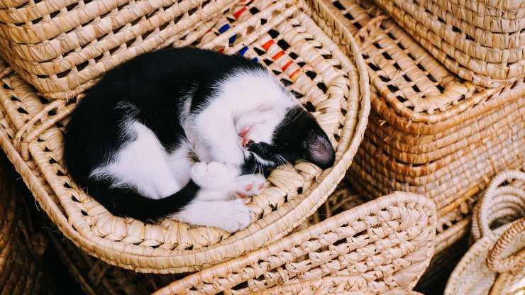 Come dorme il micio