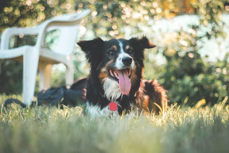 Razze canine più sensibili