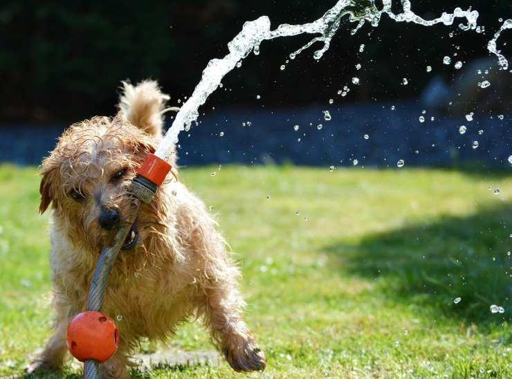 Cane che si diverte col tubo dell'acqua