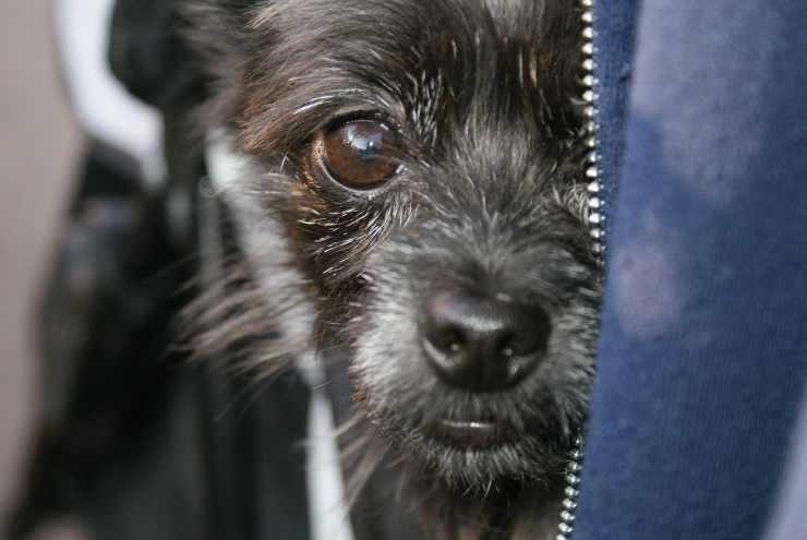 Cucciolo timoroso (Foto Pixabay)
