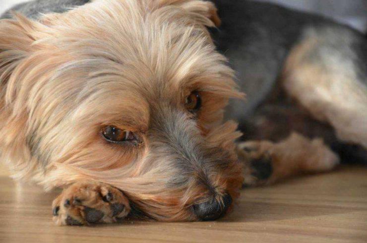 coronavirus supporto psicologico animali