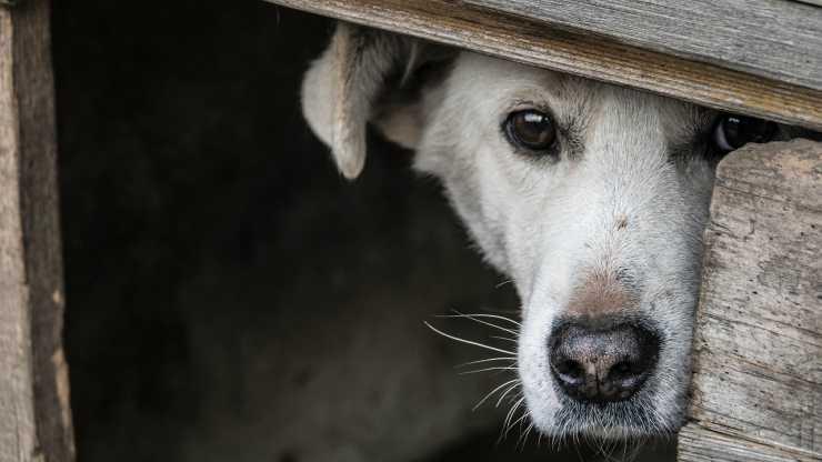 Il cane triste (Foto Pixabay)