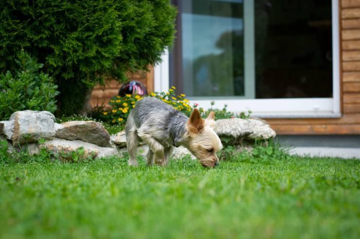 Cane fuori casa