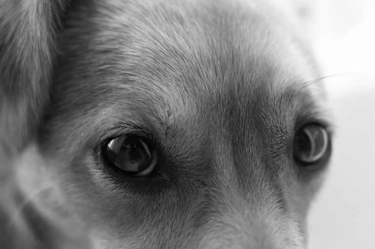 Il cane a disagio (Foto Pixabay)
