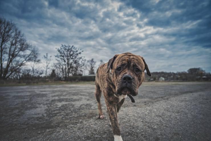 Il cane fa pipì sulle ruote
