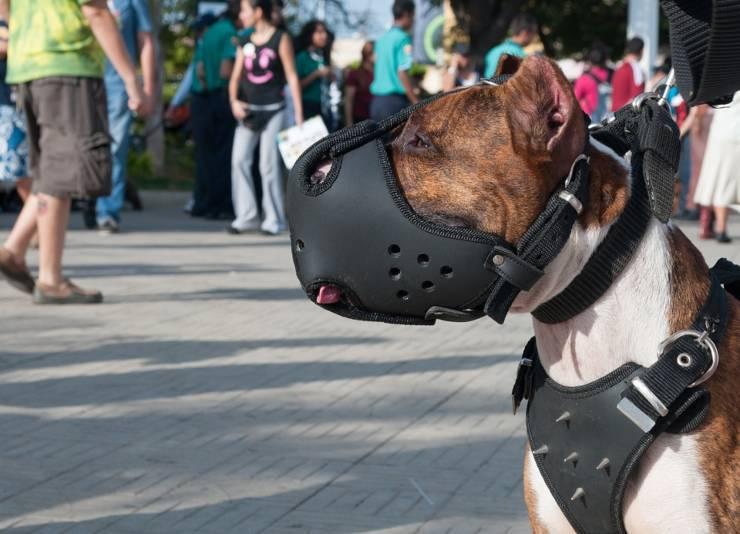 cane locali aperti al pubblico