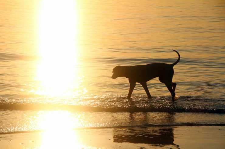 Il cane che entra in mare (Foto Pixabay)