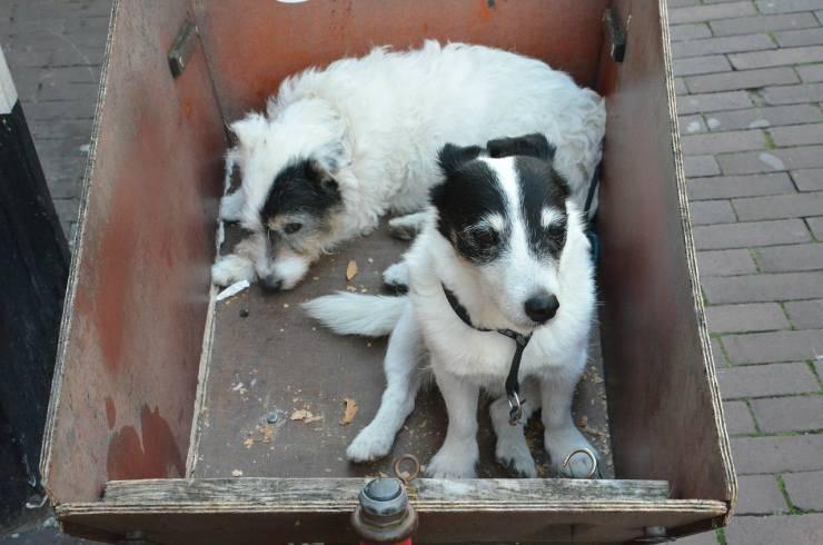 Cani in scatoloni