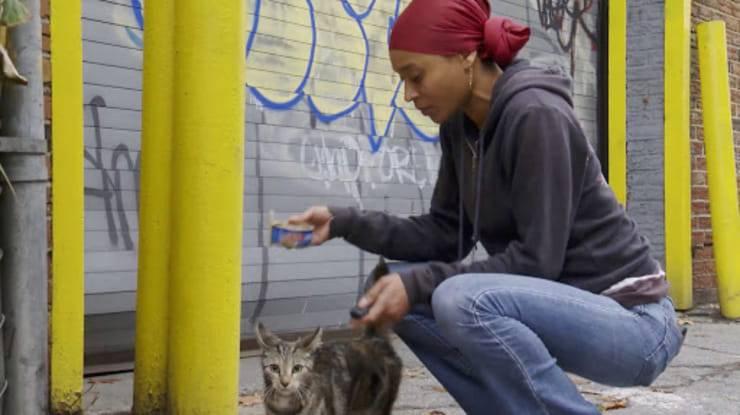 Donna si occupa dei gatti di New York