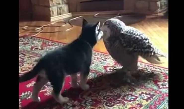Amicizia indissolubile (Foto video)