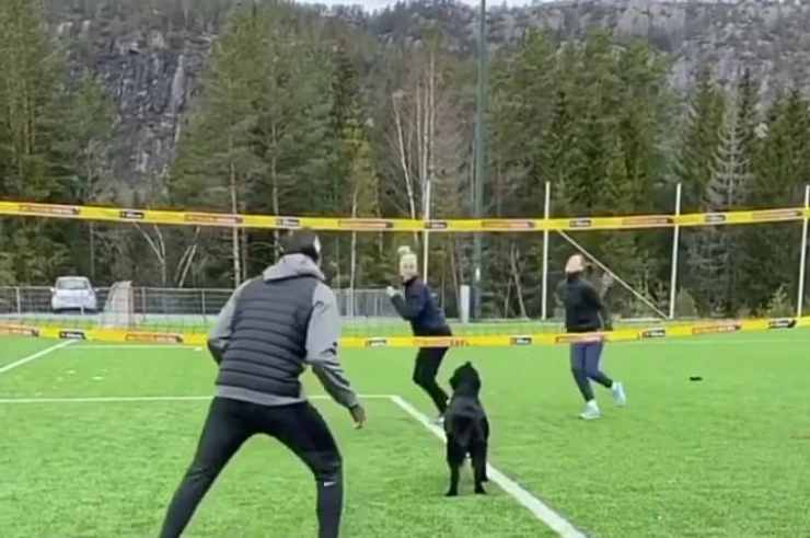Il cane attento durante la partita (Foto video)