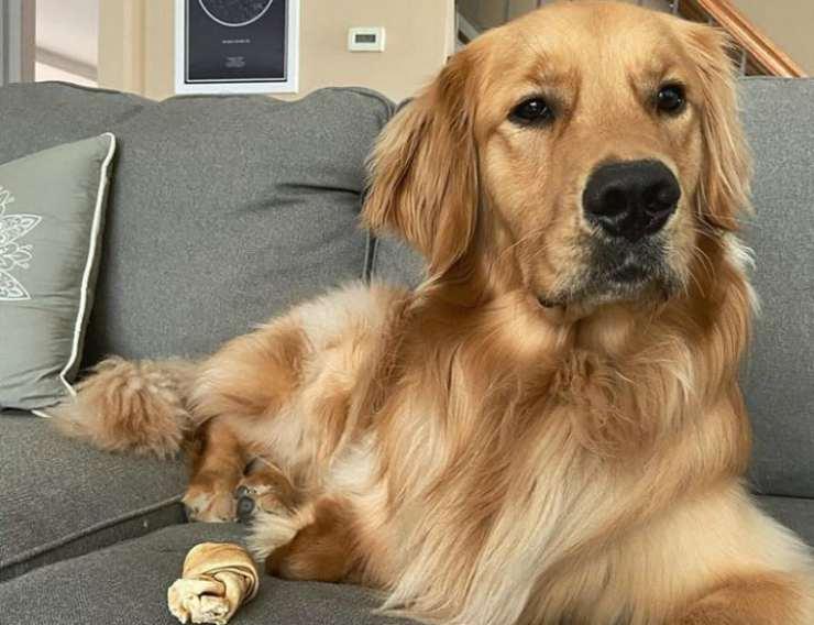 Il cane sdraiato sul divano (Foto Instagram)