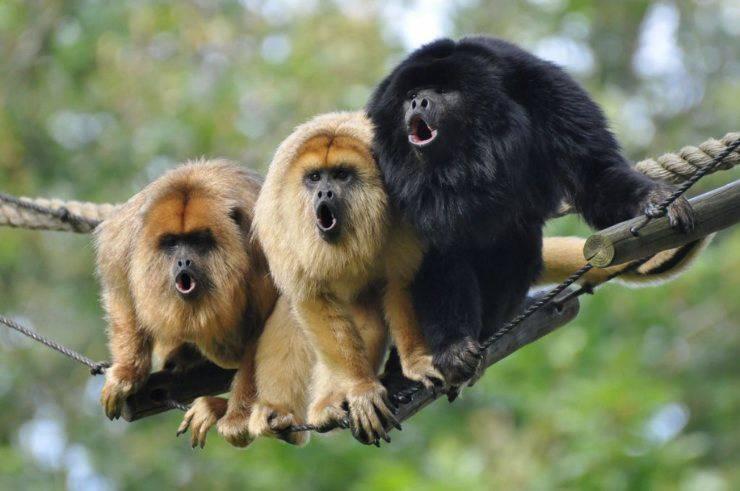 animali più rumorosi del mondo