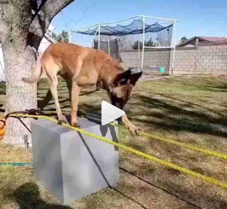 cane video esercizio