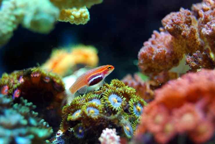 Pesci e coralli (Foto Pixabay)