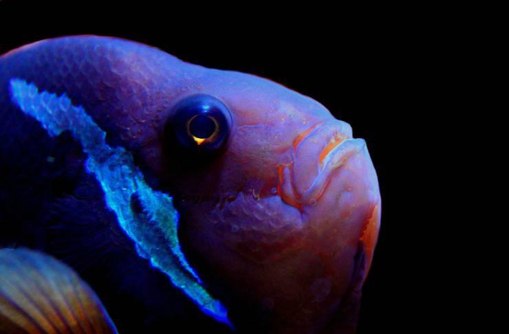 come vedono i pesci