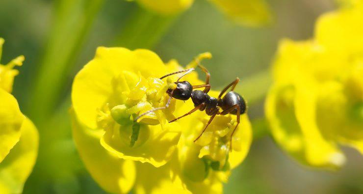 isolamento animali formica