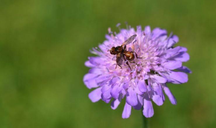 formiche volanti 2