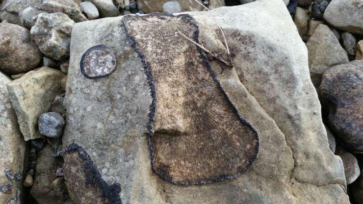 Fossile del Cretacico