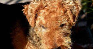Il cane ha il naso caldo