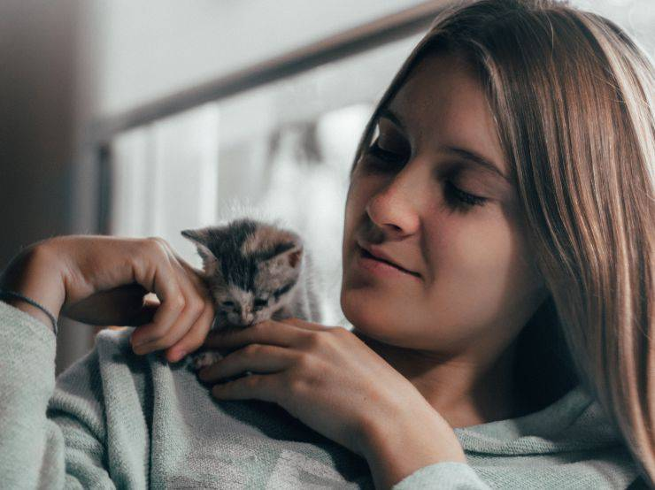 Curare l'ansia del gatto