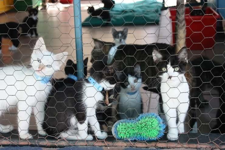 gatti colonie feline