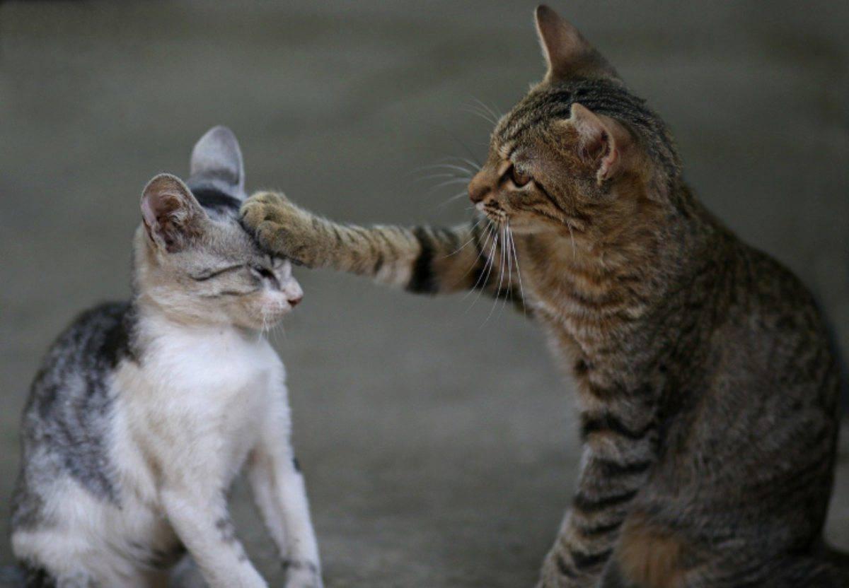 Costruire Lettiera Per Gatti il gatto ha memoria dei ricordi? funzionamento e modalità