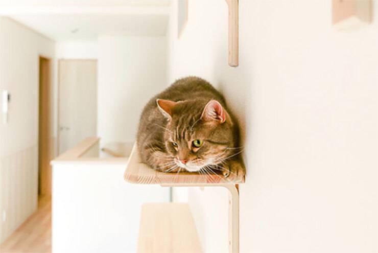 Appartamento per gatti