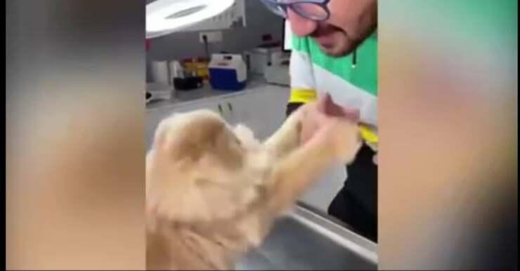 Gatto arrabbiato con il veterinario