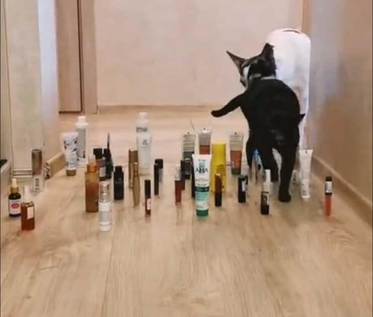 gatto ostacoli