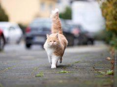 Perche i gatti spariscono per giorni da casa