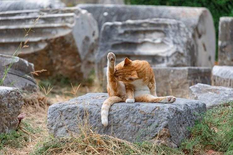 gatto si lava