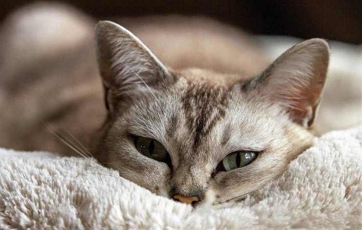 gatto si sente solo senza un altro gatto