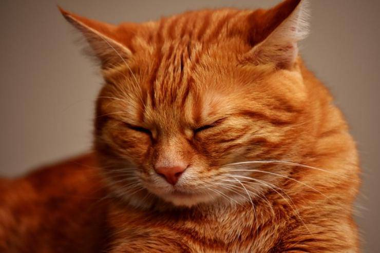 gatti strizza gli occhi