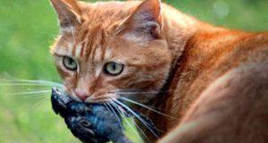 istinto predatorio gatto