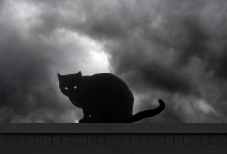 gatti mitologici gatto nero leggende