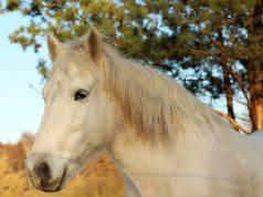 decreto io resto a casa cavallo