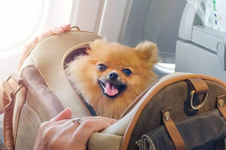 quarantena viaggio cane