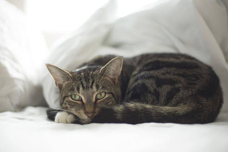 il tuo gatto è asociale