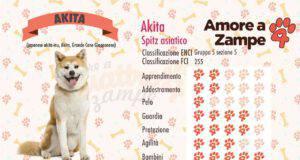 infografica cane AKITA new