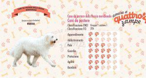 Cane da pastore della Russia Meridionale scheda razza