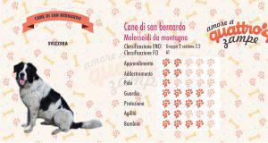 Cane di San Bernardo scheda razza