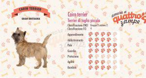 Cairn Terrier scheda razza
