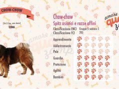Chow-chow scheda razza cane