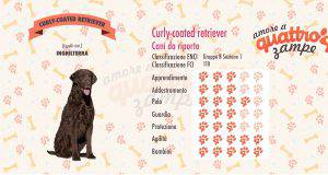 Curly Coated Retriever scheda razza