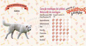 Cane da montagna dei pirenei scheda razza